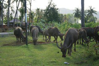 LombokBangka 147